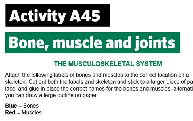 KS4-A45-Label the musculoskeletal system
