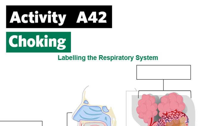 KS4-A42-Label the respiratory system