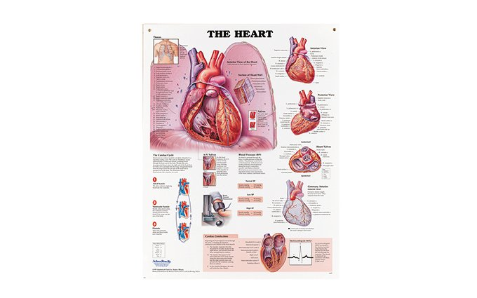The Heart Chart